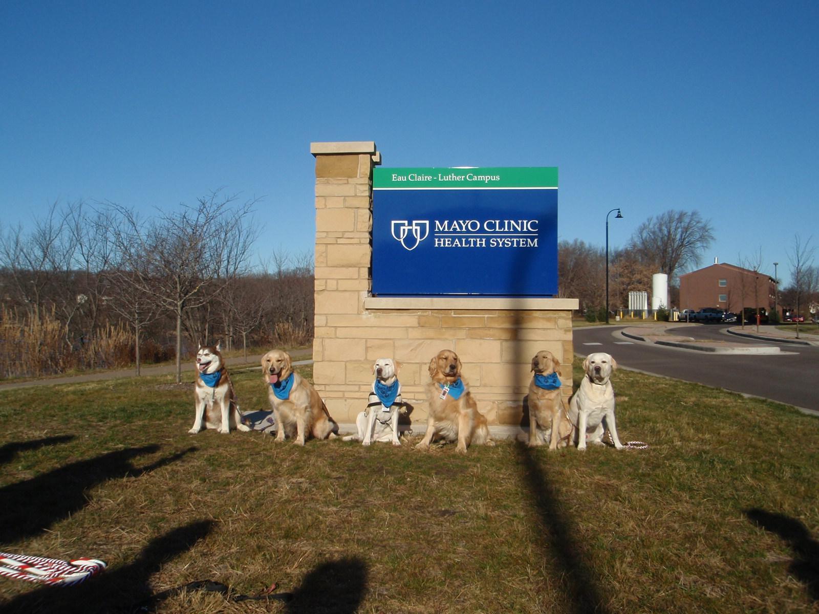 Rude Dog University