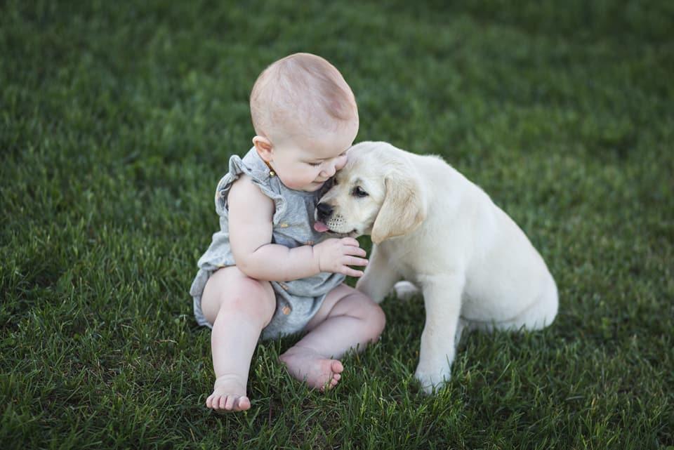 puppies15